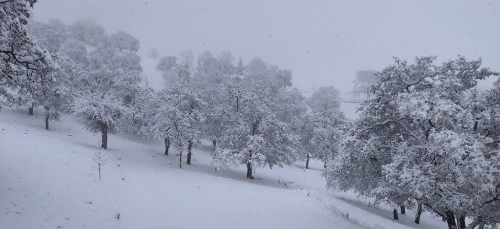 snowday-12262019-5